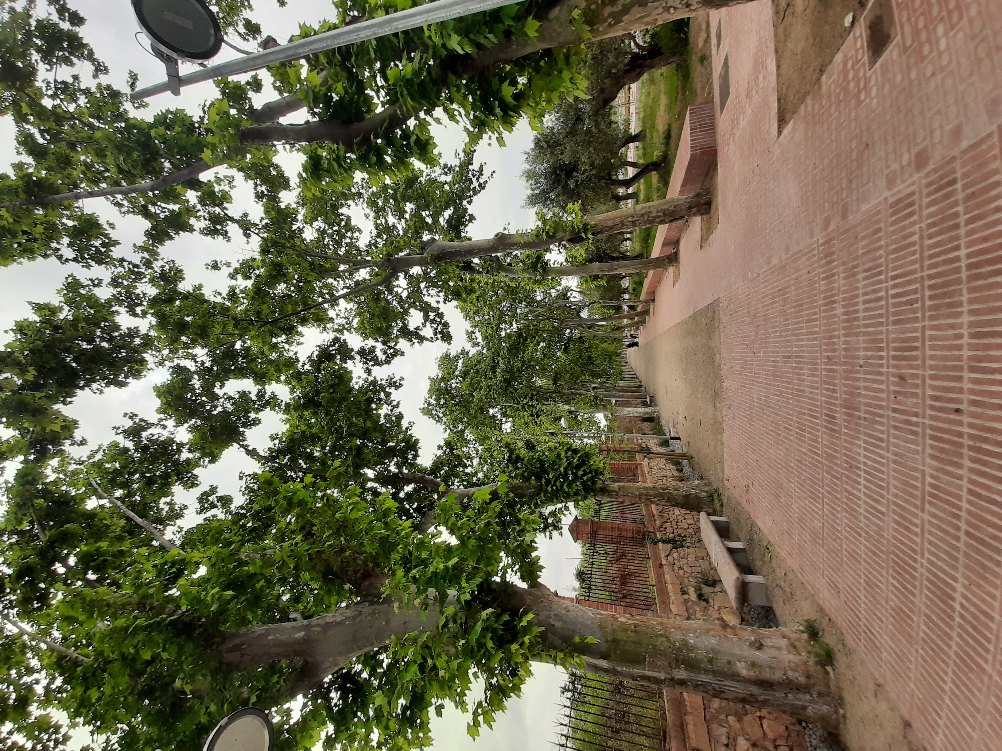 Imatge del passeig, amb el camí per a vianants